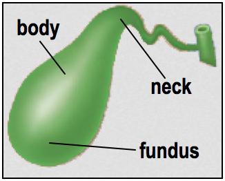 Gallbladder regions