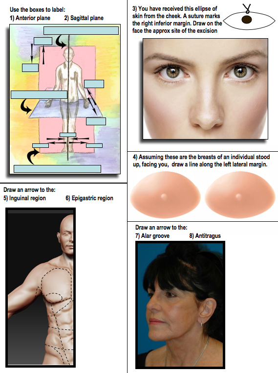 Image showing the picture round from a histology lab quiz