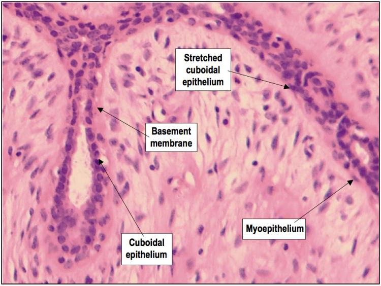 Cells of FAD